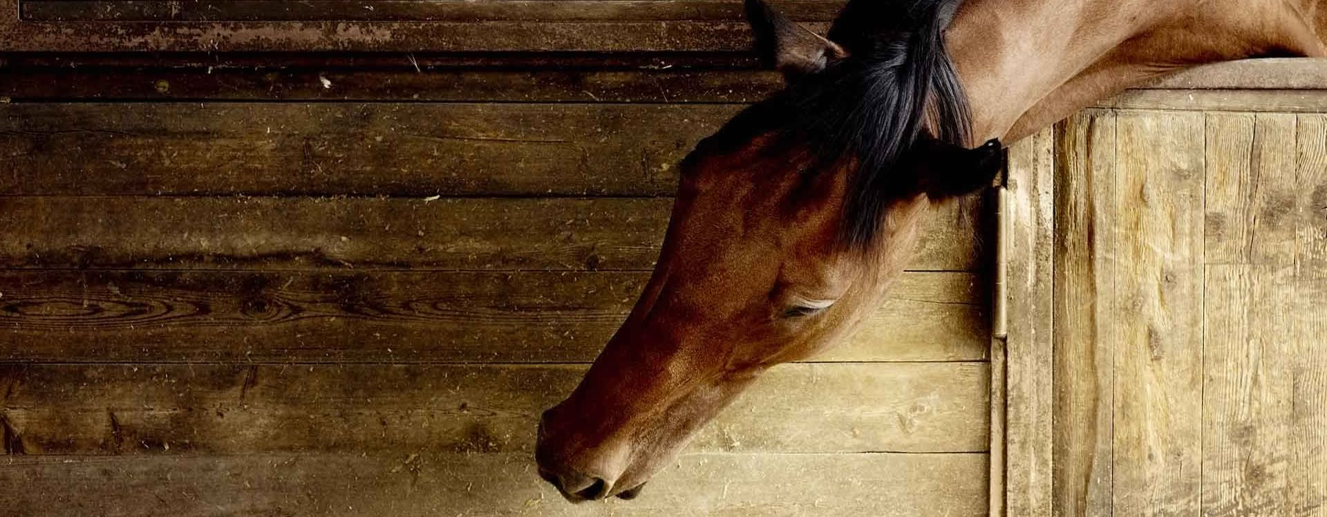 Porrini Franco ecommerce mangimi per cavalli